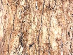 1708-Walnut Travertine