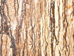 1707-Walnut Travertine