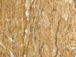 1712-Walnut Travertine
